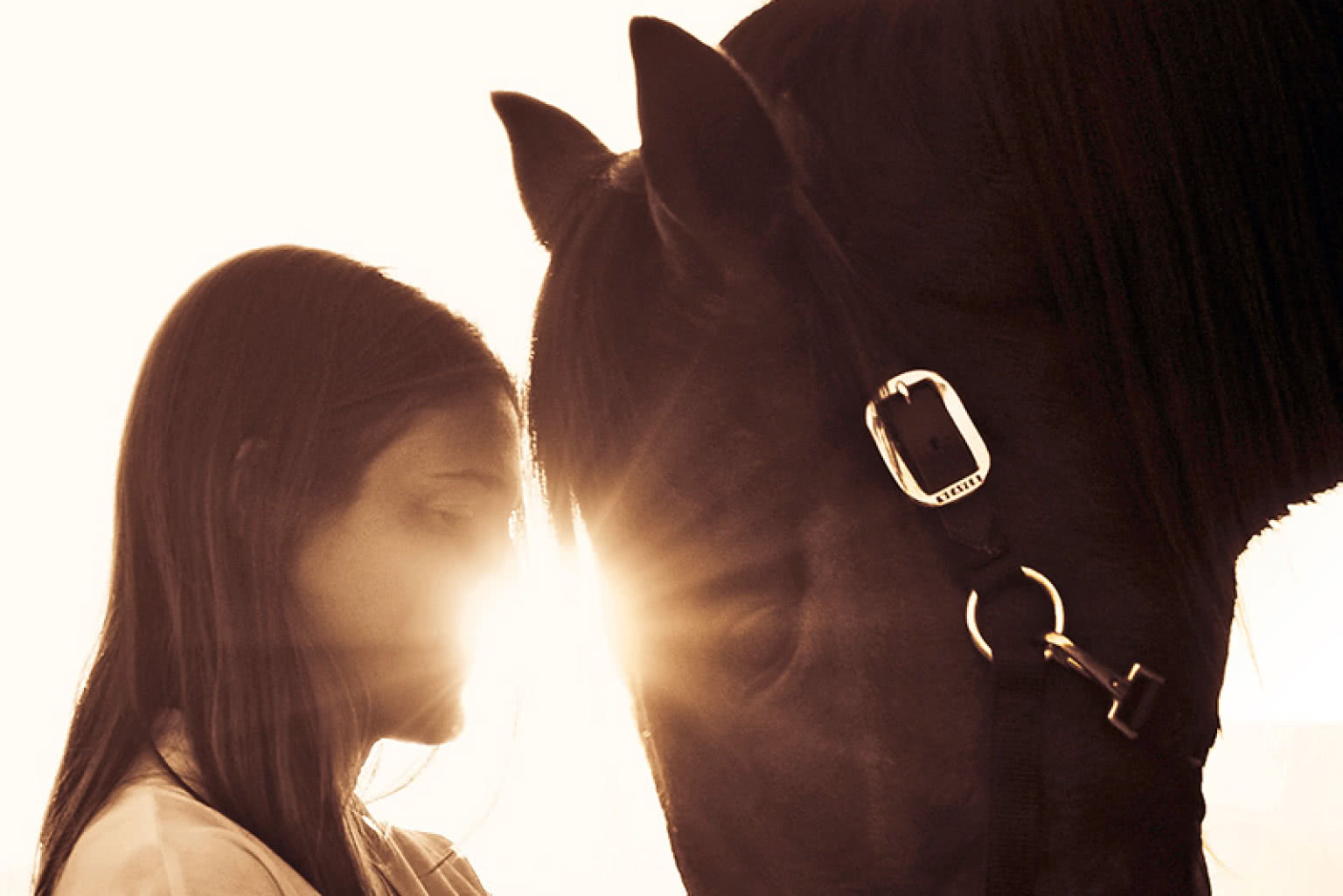 Equine Facilitated Therapy And Its Role In Addiction Treatment